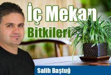Photo of İç Mekan Bitkileri