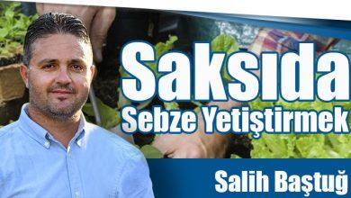 Photo of Saksıda Sebze Yetiştirmek