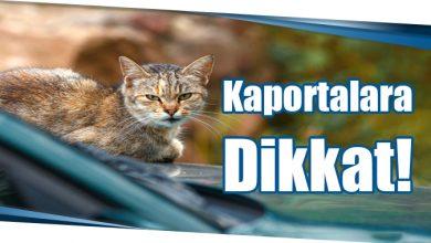 Photo of Kaportalara Dikkat!