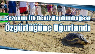 Photo of Sezonun İlk Deniz Kaplumbağası Özgürlüğüne Uğurlandı