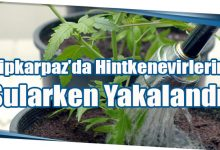 Photo of Dipkarpaz'da Hintkenevirlerini Sularken Yakalandı!